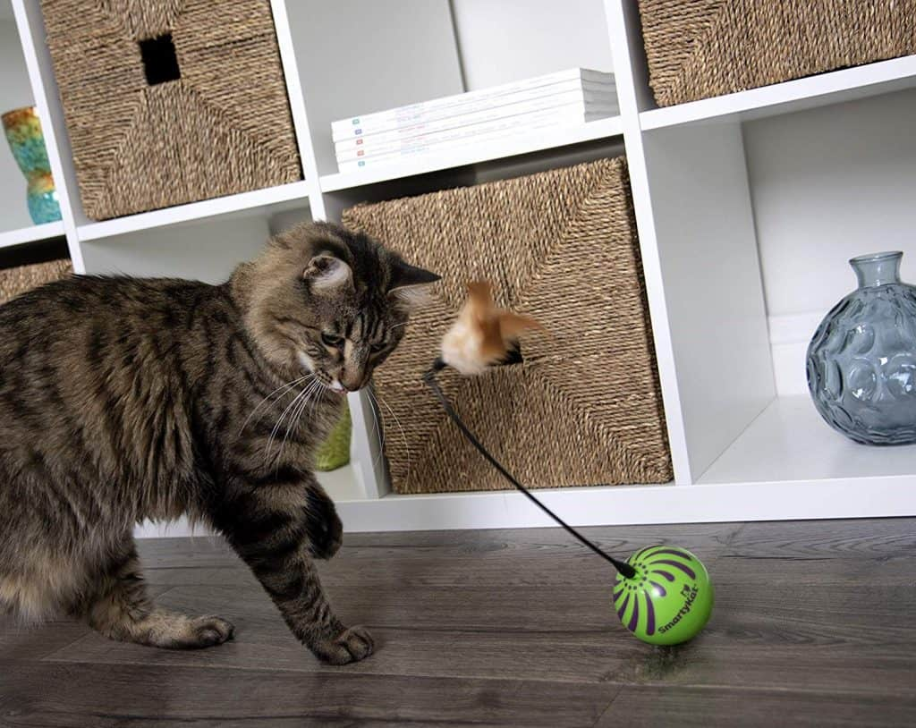 Best Cat Toy